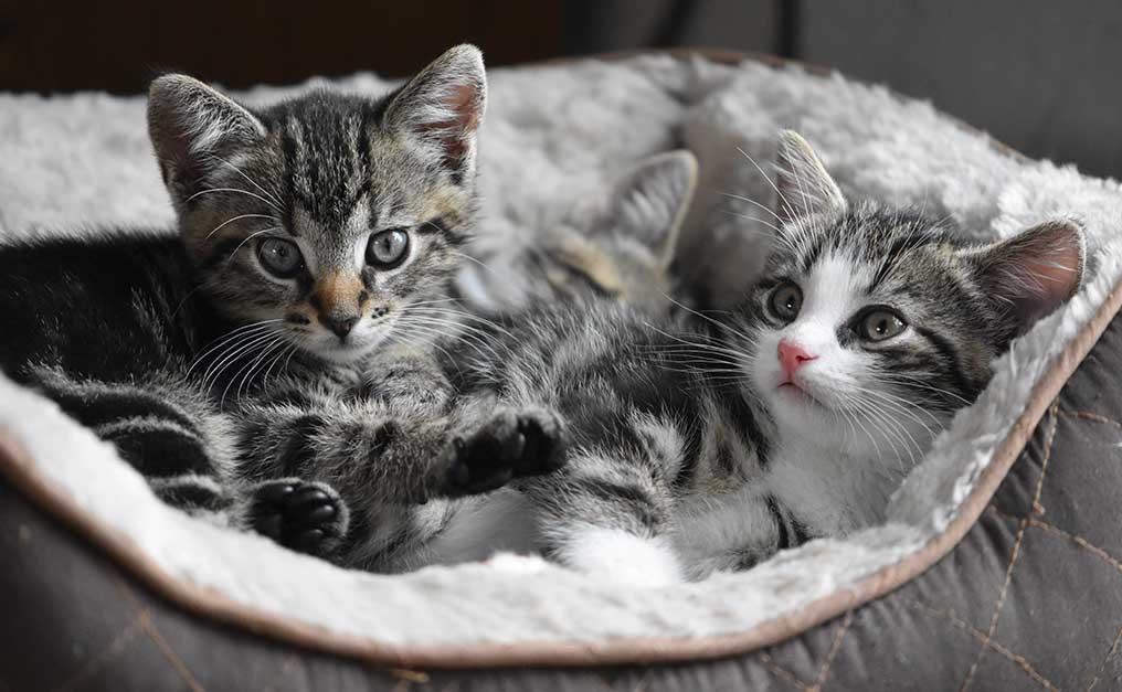 transporte de gatos