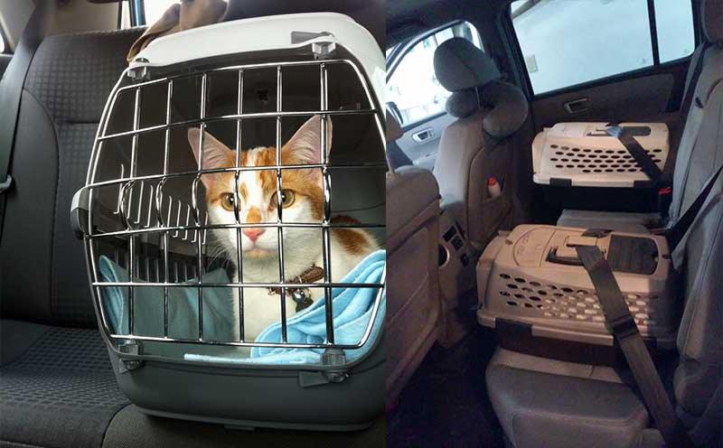 trasportin caja transporte gato coche seguro cinturon